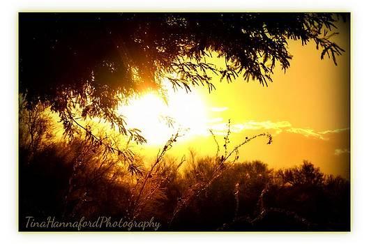 Sunday Sunrise by Tina Hannaford
