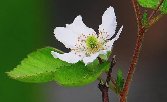 Sundays flower by Dave Hrusecky