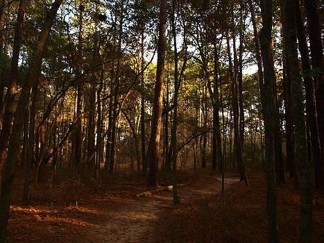 Sundown in the Woods by Kathleen Palermo