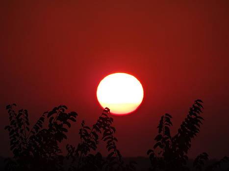 Sundrop by Jon Glynn
