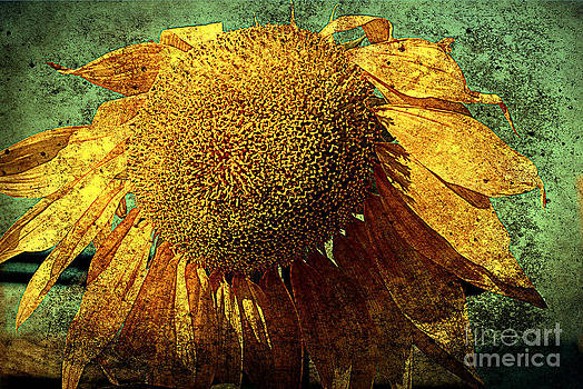 Susanne Van Hulst - Sunflower 2