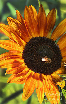Gary Gingrich Galleries - Sunflower and Bee-4041