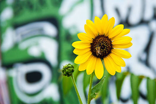 Sunflower And Graffiti  by Mark Weaver