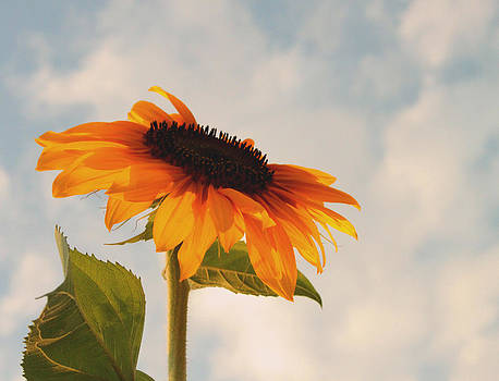 Sunflower and Sky by Terri JS Molitor