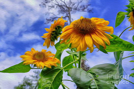 Sunflower Art by George Paris