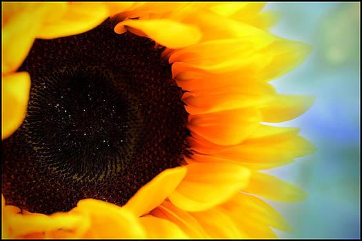 Sunflower by Aya Murrells