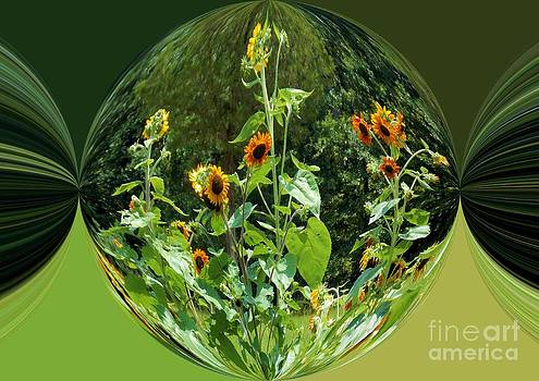 Sunflower Candy by Annette Allman