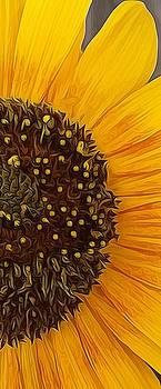 Sunflower by Daniel Sallee