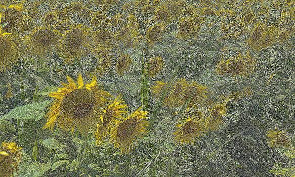 Sunflower Field by Glen Klein