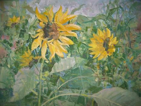 Sunflower garden by Bart DeCeglie