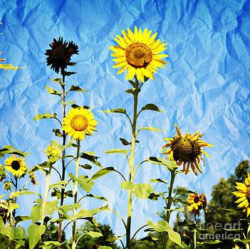 Nancy Stein - Sunflower Garden On Crumpled Paper