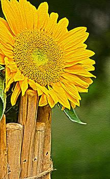 Sunflower I by Carl Christensen