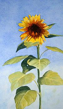 Sunflower II by Vikki Bouffard