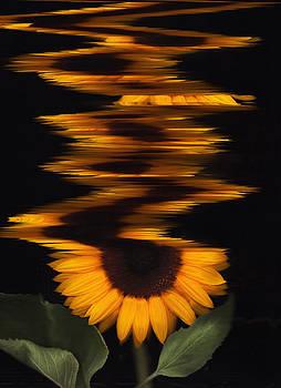 Susan Leake - Sunflower in a tizz