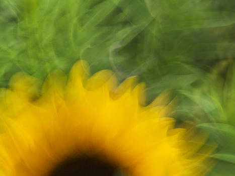 Sunflower In Motion by Andy Mars