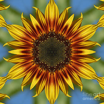 Sunflower Kaleidoscope by Cindi Ressler