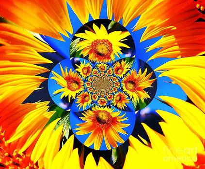 Sunflower Kaleidoscope by Judy Palkimas