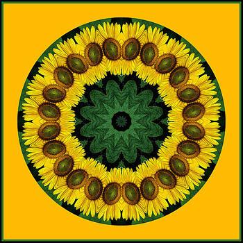 Sunflower Kaleidoscope by Liz Mackney