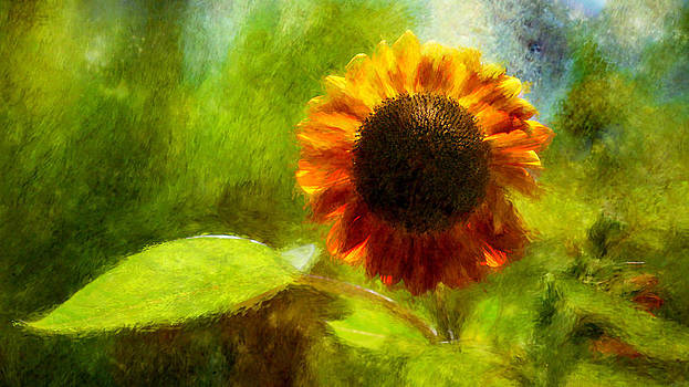 Sunflower by Kelly Rockett-Safford