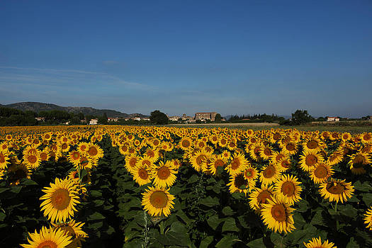 Susan Rovira - Sunflower Lanscape 1