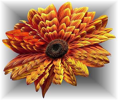 MTBobbins Photography - Sunflower layers