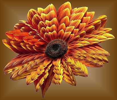 MTBobbins Photography - Sunflower Layers on Brown