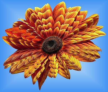 MTBobbins Photography - Sunflower Layers on Sky Blue