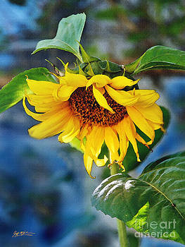 Jeff McJunkin - Sunflower Magic I