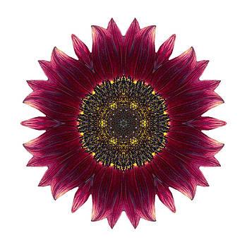 Sunflower Moulin Rouge I Flower Mandala White by David J Bookbinder
