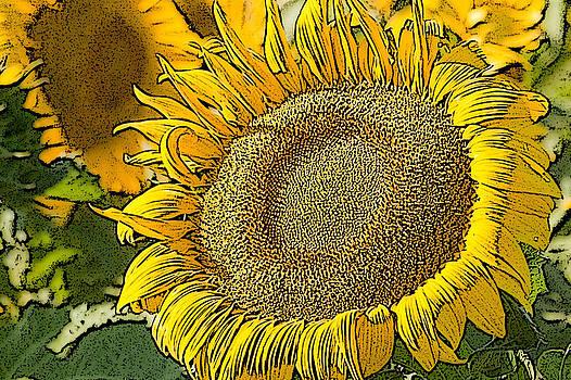 Sunflower near Pierre South Dakota by Rob Huntley