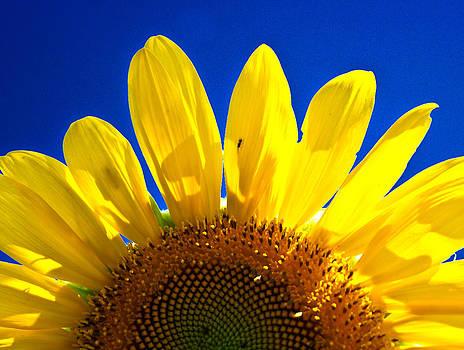 Sunflower by Norchel Maye Camacho