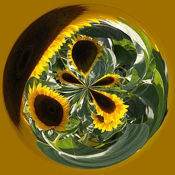 Sunflower Orb by Liz Mackney