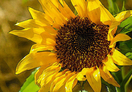 Sunflower by Pandyce McCluer