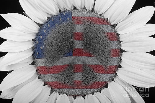 James BO  Insogna - Sunflower Peace Out