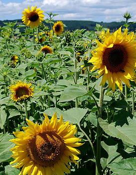 Sunflower Portrait by Mamie Gunning