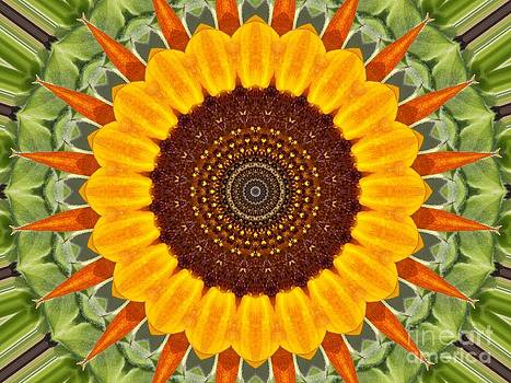 Sunflower Power by Annette Allman
