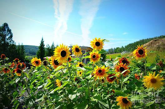 Sunflower Salute by Kiana Carr