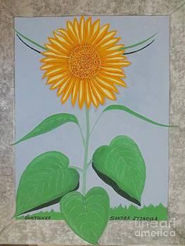 Sunflower by Sandra Spincola