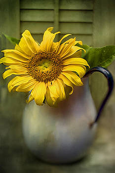 Sunflower Series I by Kathy Jennings