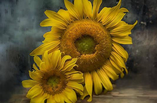 Sunflower Series III by Kathy Jennings