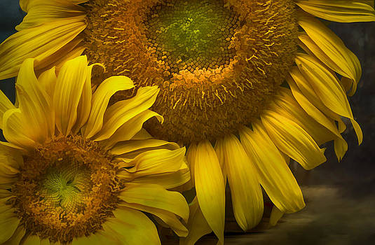 Sunflower Series IV by Kathy Jennings