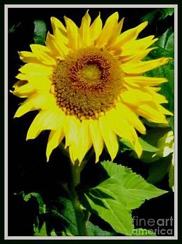 Gail Matthews - Sunflower Sign of Happiness