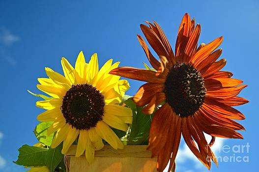 Sunflower Sky by Sharon L Stacy