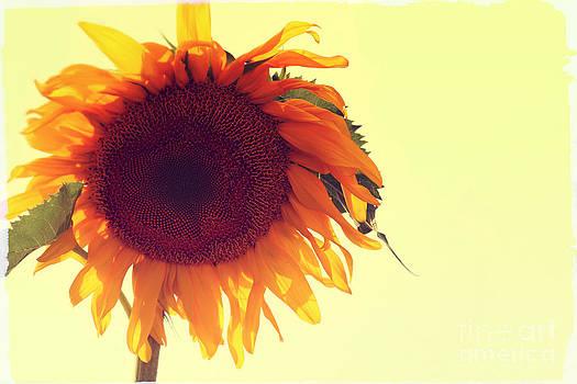 Sophie Vigneault - Sunflower