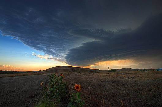Sunflower Supercell by Chris Allington