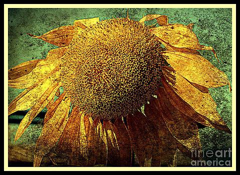 Susanne Van Hulst - Sunflower