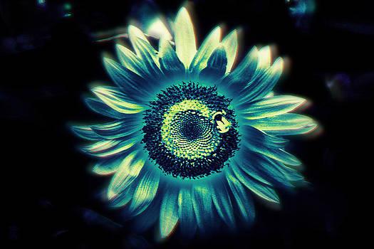 Sunflower Sutra by Li   van Saathoff