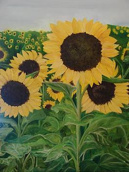 Sunflower Trail by Shiana Canatella