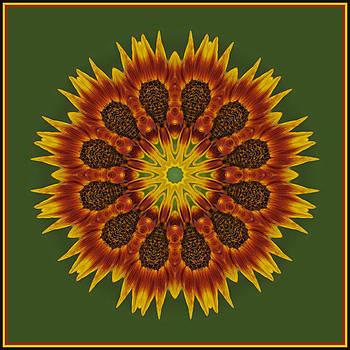 Sunflower Transformation by Liz Mackney