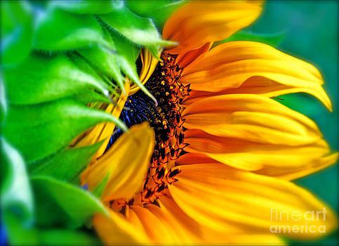 Gwyn Newcombe - Sunflower Volunteer Good Morning